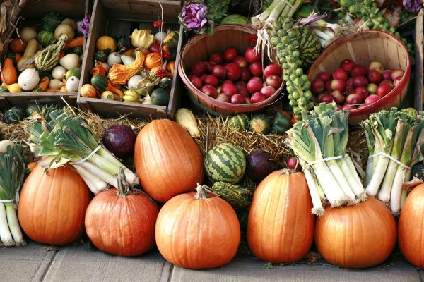Fall vegetables, pumpkins, gourds, watermelons, apples, cabbage and leeks, on display