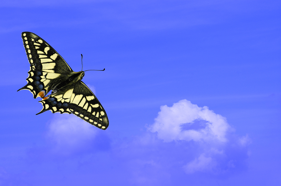 Joyfull spring, swallowtail butterfly against a blue sky