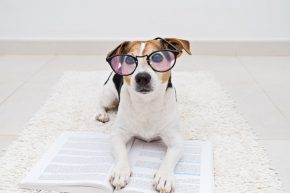 Dog in glasses laying on a notebook