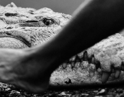 Priming Yourself For Success: Befriending Your Crocodile Brain!