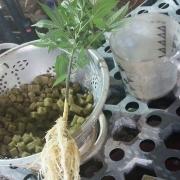The Herbal Company