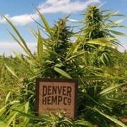Denver Hemp Co.