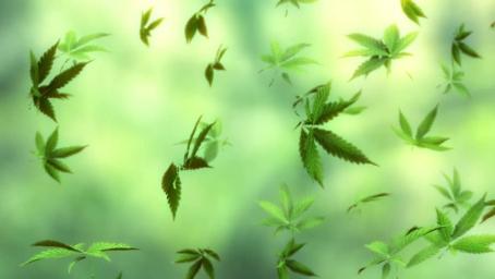 1-weed.jpg
