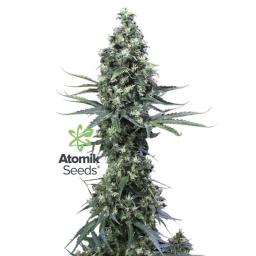 Atomik Haze Atomik Seeds 2017-10-30