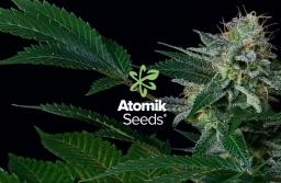White Widow Atomik Seeds 2017-10-30