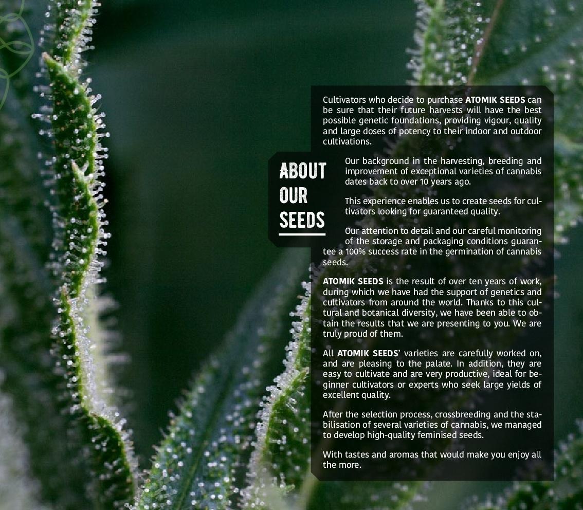 Atomik-Seeds-Catalog-autoflowering-and-feminised-cannabis-seedbank-003