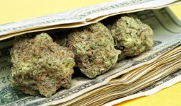 This-Is-How-Much-Cannabis-10-Will-Buy-You-Around-The-Globe-800x469.jpg