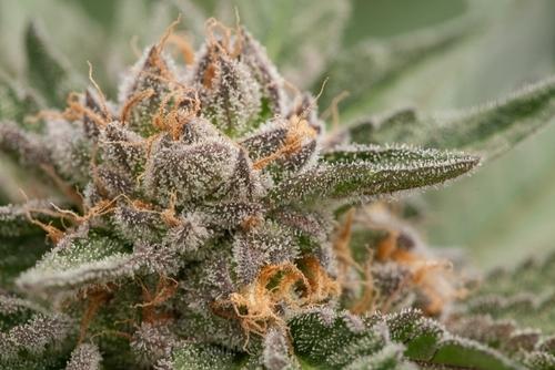weed 2018-06-24