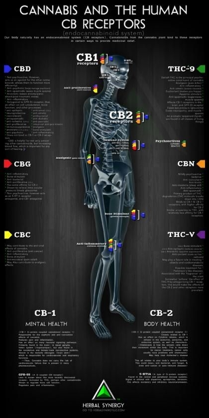 CANNABIS AND THE HUMAN CB RECEPTORS