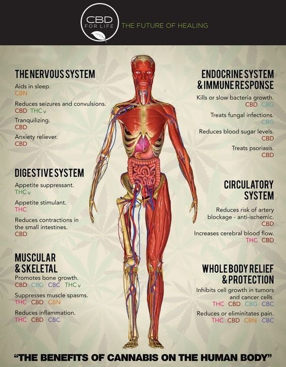 THE BENEFITS OF CANNABIS ON THE HUMAN BODY