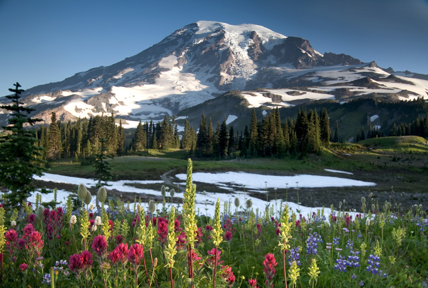 Wildflower meadow near Paradise on Mount Rainier
