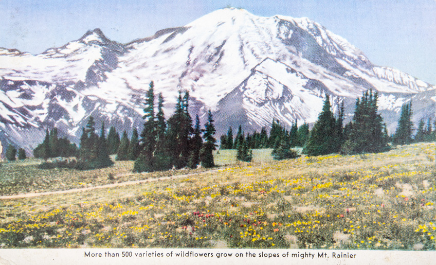 More than 500 varieties of wildflowers grow on the slopes of mighty Mt. Rainier