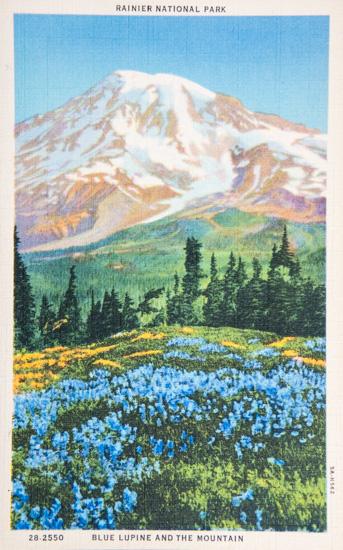 Rainier National Park - Blue Lupine and the Mountain