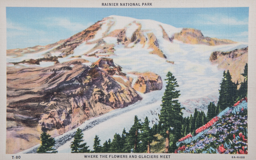 Rainier National Park, Where the Flowers and Glaciers Meet.