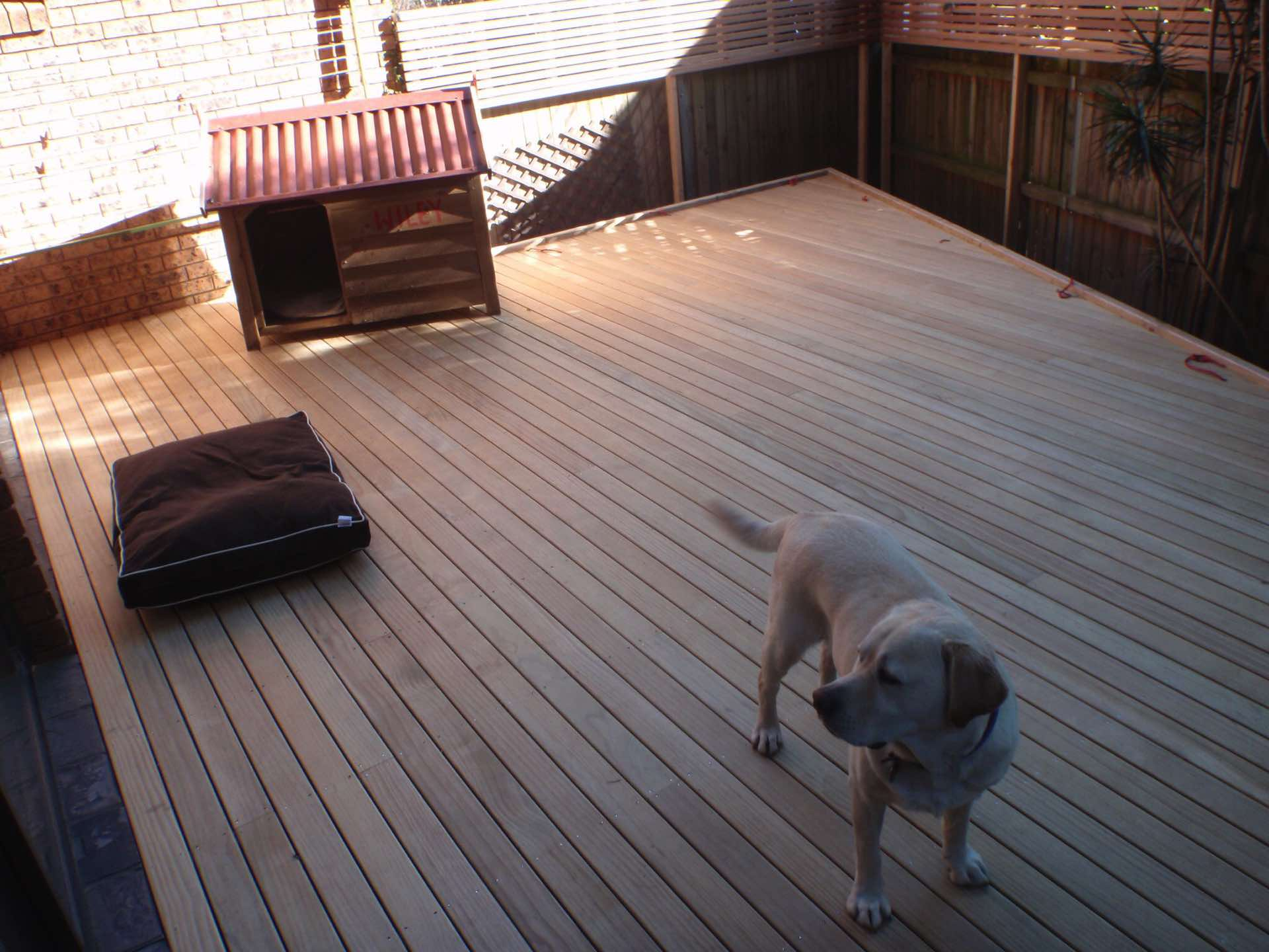 New treated pine deck ready for lights in an area that previously couldnt be used.  Being watched by Wyley the dog Northbridge, NSW