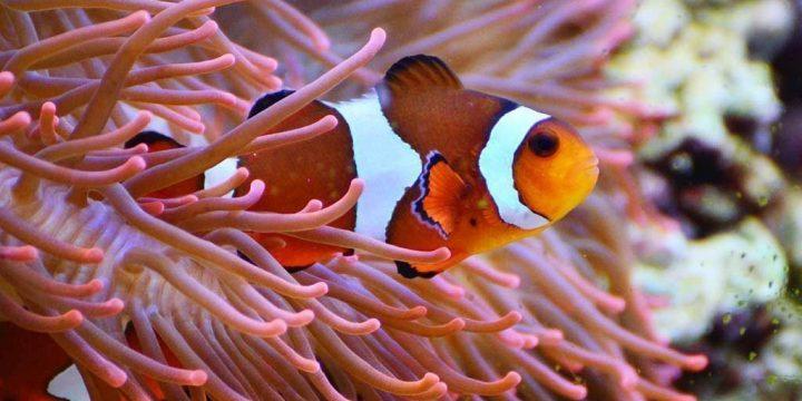 Las relaciones más asombrosas en el océano