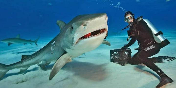 10 tips para bucear o esnorquelear con Tiburones