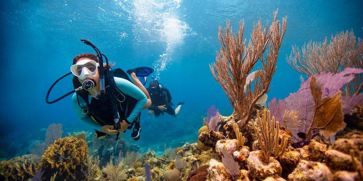 ¿Cómo el curso PADI Open Water Diver puede cambiar tu vida?