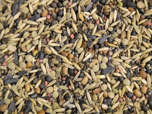 A display of multiple variety of seeds.