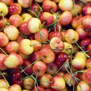 Rainier cherries grown in WA (photo: Thomas Hawk)