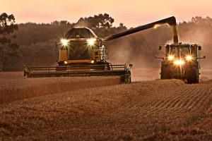 Harvest time.  Photo: joinash via Flickr CC license.