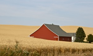 Wheat in the Palouse region of eastern WA. Photo: L. Tanner via Flickr CC.