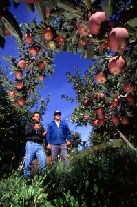 Though Appletown in this article is a theoretical location, producers sharing what practices work for them is a real source of information that can help others make decisions under uncertain future conditions. Photo credit: Scott Bauer/USDA, under CC BY 2.0