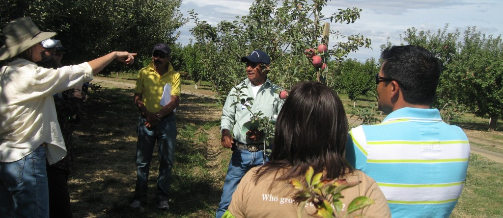 Mendoza explains varietal selection on WSU-Tilth farm walk. Photo: M. Ostrom.