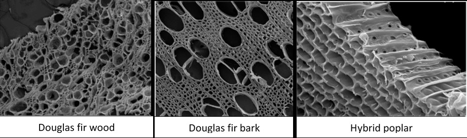 Electron microscopy images showing porous structures of biochar
