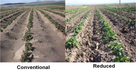 soil erosion in conventional field