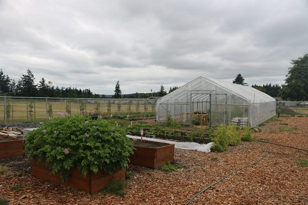 The fenced in garden with a greenhouse, raised beds and rows of vegetables.