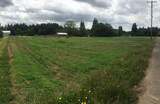 This is a panoramic photo taken from the NE corner of the property facing SW.
