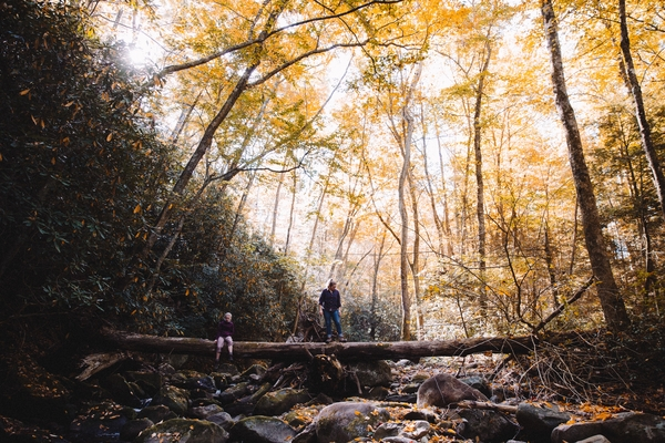 tennessee-forest