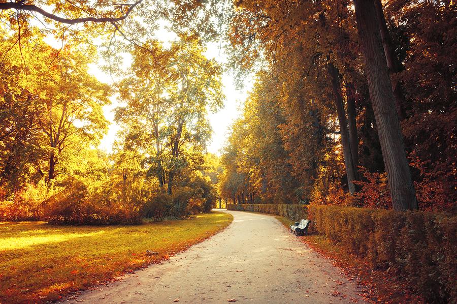 September Fall Landscape - travel healthcare jobs sept