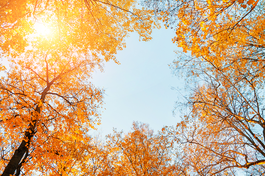 Autumn trees-travel healthcare jobs october 2018-travel nursing jobs-travel nursing jobs october