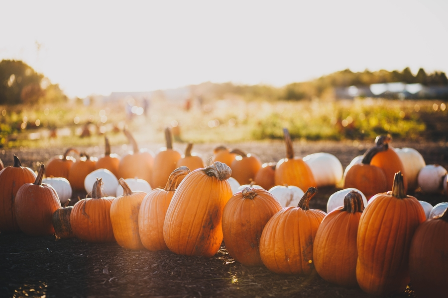 maddy-baker-unsplash-fall pumpkins-travel healthcare jobs oct