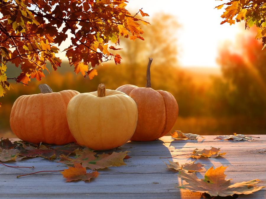 Autumn-Thanksgiving-Fall-Pumpkins-travel healthcare jobs Nov 19