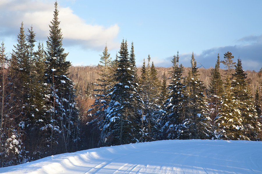 Pine trees-snow-White Mountains-New Hampshire-travel healthcare jobs dec 10