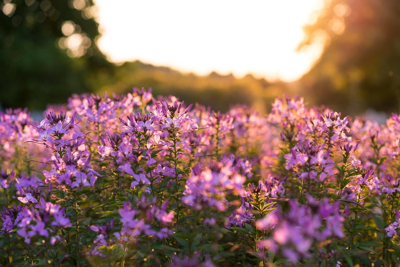 university-of-kentucky arboretum-chris abney-unsplash-travel healthcare jobs may 14