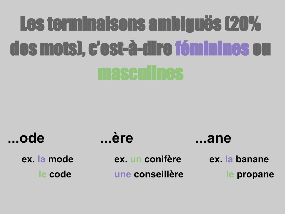 French Terminaisons ambigues Resource Preview
