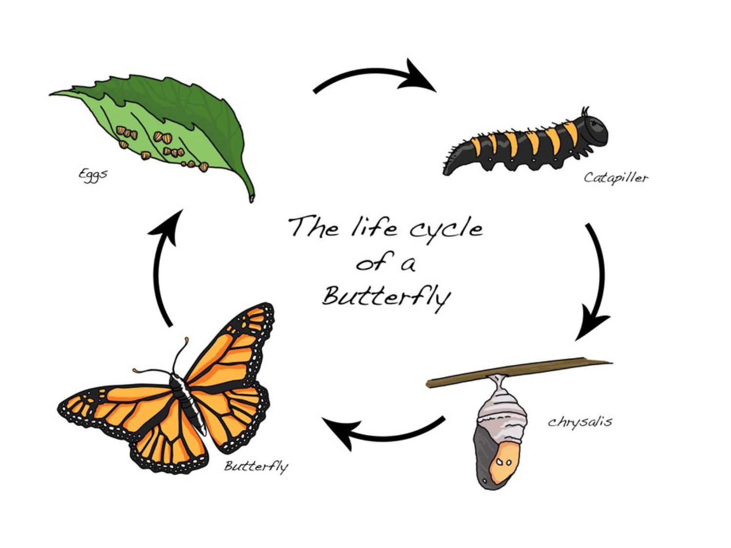 Life Cycle of a Butterfly Resource Preview