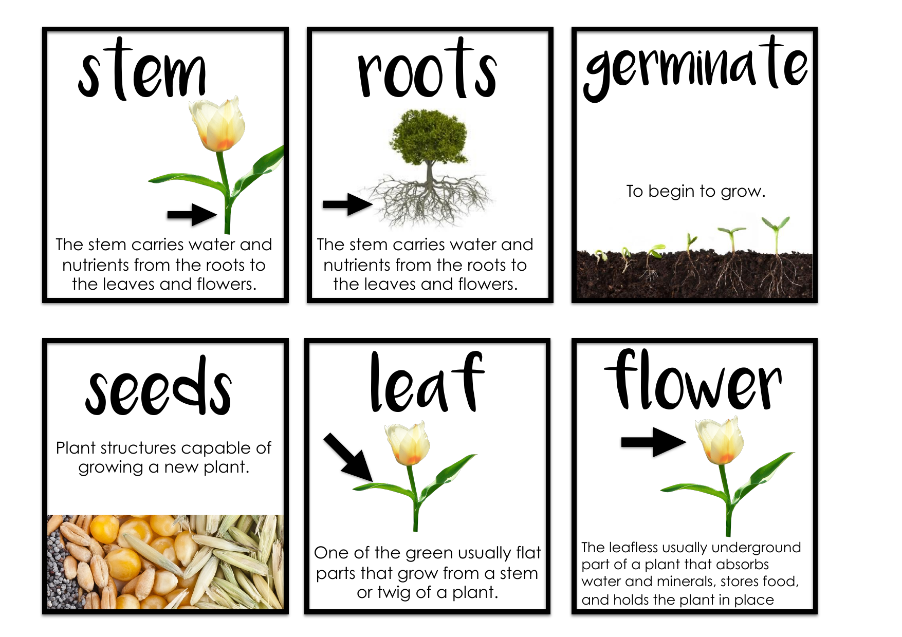 Needs of Plants and Animals Vocab  Resource Preview