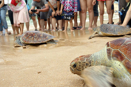 傷病海龜救援計畫,傳遞生命教育