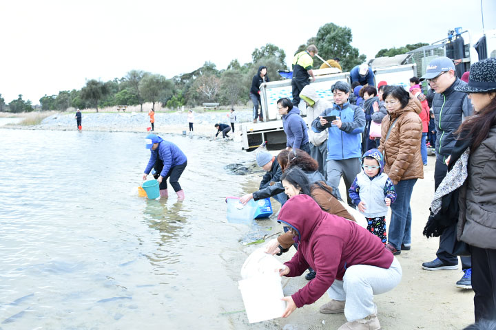 福智澳洲墨爾本教室配合澳洲維多利亞省漁業部進行冬季放生活動