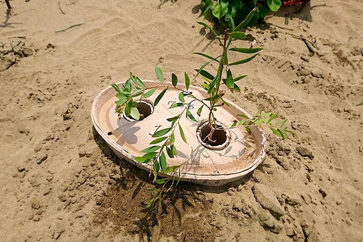 慈心基金會研發專利環保水寶盆涵水技術(Eco-friendly-Plant-Water-Reservoir)