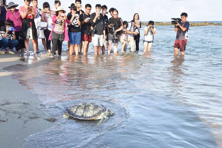 福智與臺東縣政府、林管處攜手,送海龜回大海的家