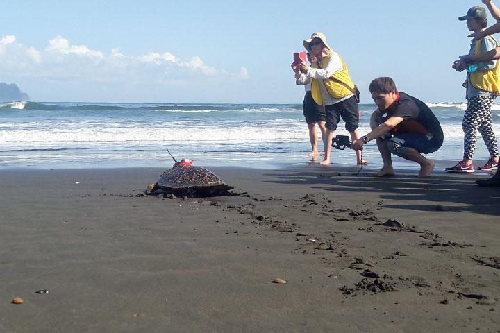 玳瑁傷龜獲救添新例,福智參與海洋大學救治野放活動