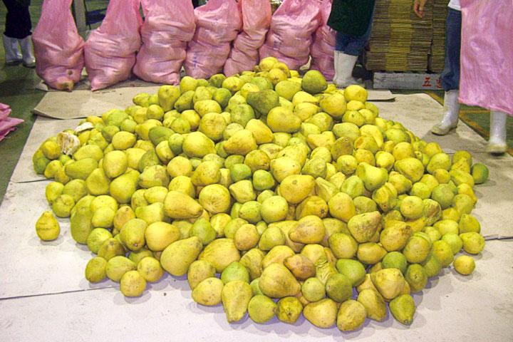 來自花蓮的有機文旦柚