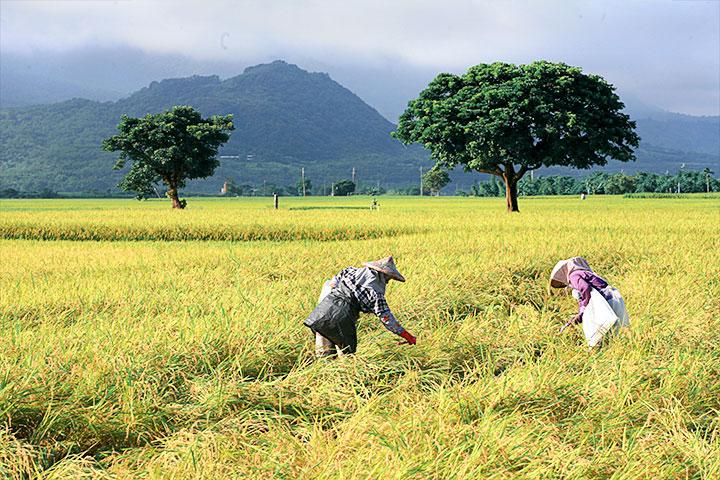 臺灣農村以小農為主,慈心基金會與林務局合作推動綠色保育計畫,積極推動棲地生態營造,連結農友對於土地、物種情感的人文精神。(攝影/呂艷芳)