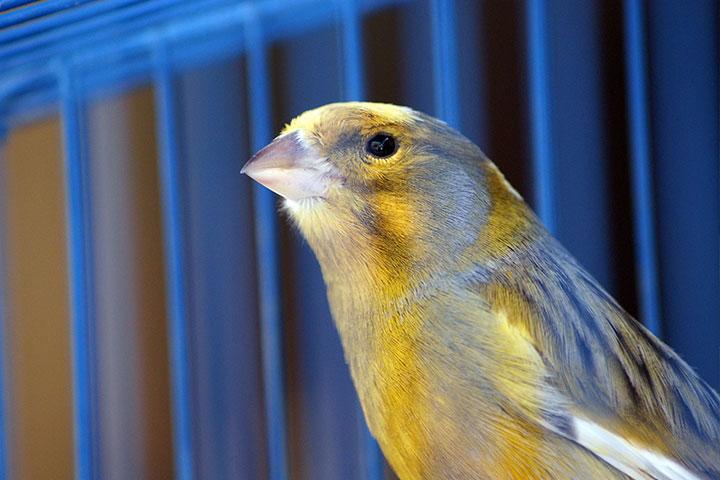 加拿大英文廣論班Michele-受困小鳥的啟示